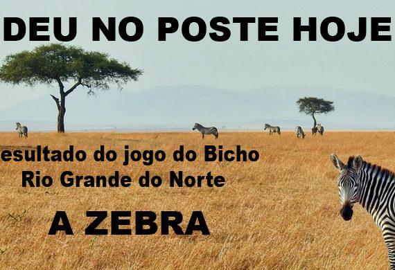 Jogo do Bicho Rio Grande do Norte (A Zebra)
