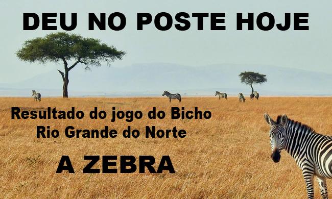 a zebra natal, resultado, a zebra,